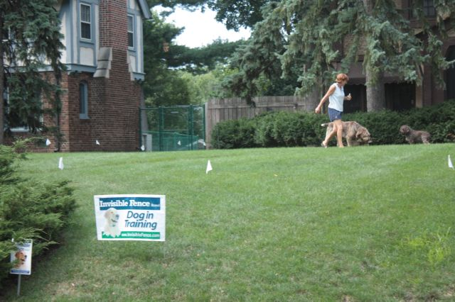 Training camp for dogs and owner.