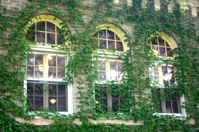 The ivy covered windows on the east side of the pavilion.