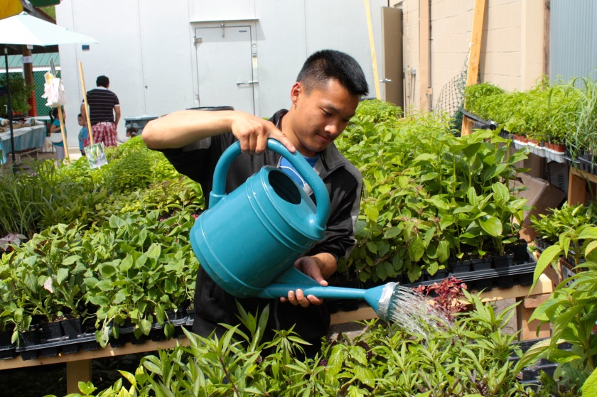 Luke Yang attentively tends to his herbs.