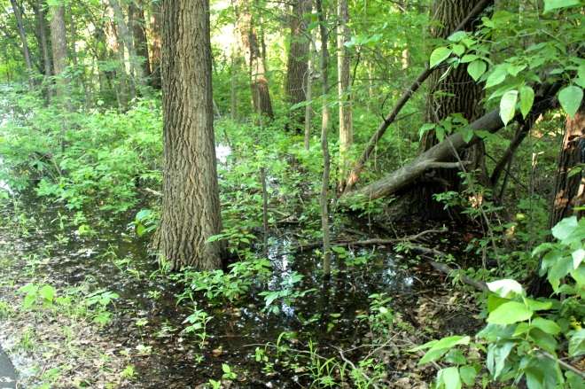 The flood has overwhelmed much of the flora in the park.