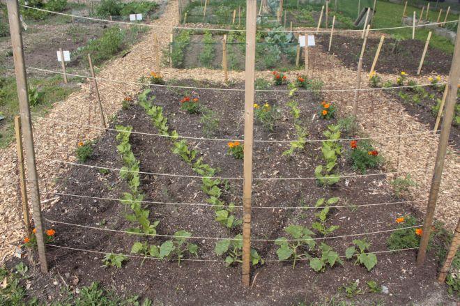 pilgrm baptist garden 3