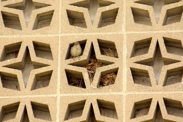 Birds love the blocks. Many have built nests in them while others just use them to roost.