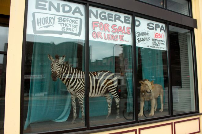 "I believe the window sign did say ""endangered space."" How many walkers have been startled by the life-size animals in the windows?"