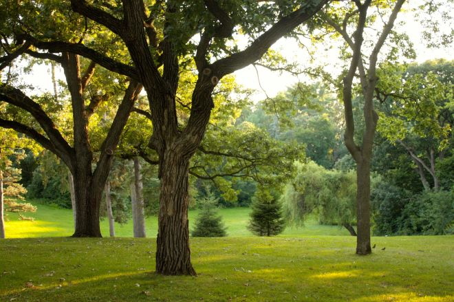 Trees of many varieties are one of College Park's many draws.