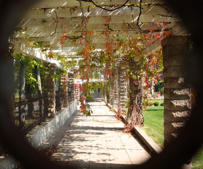 Peeking through a decorative wrought iron circle on the fence I got a unusual view of the sidewalk between the house and the back yard. The vines hanging on a large pergola confirm it's autumn.