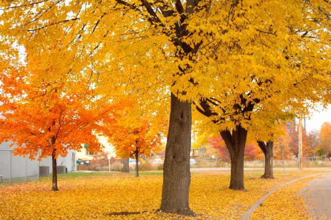 Nearby the maple trees burst with yellow and orange.