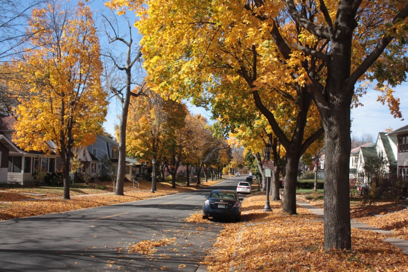 The golden leaves of the maple trees are set off magnificently by the deep blue sky.