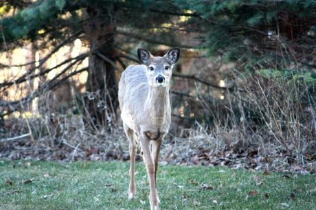 One deer stared my camera and me down from about 20 feet away.