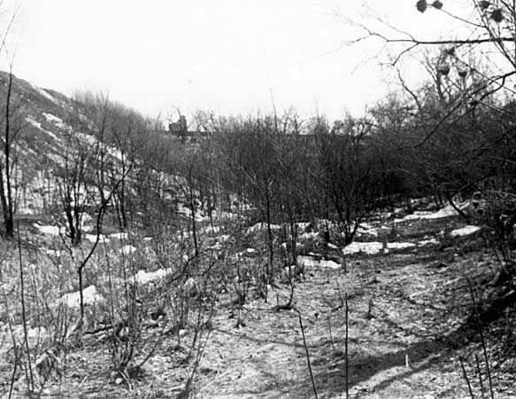 Swede Hollow, around 1965, the houses and train tracks only memories. trees and other folliage is reclaiming The Hollow.