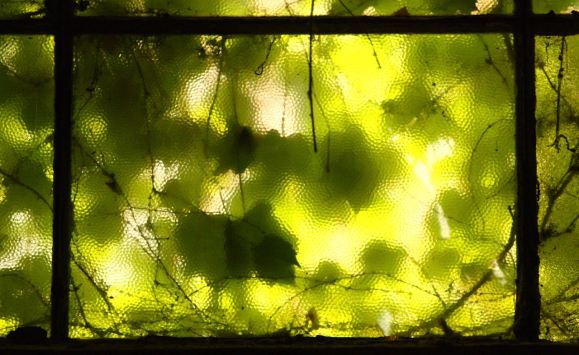 leaf covered window