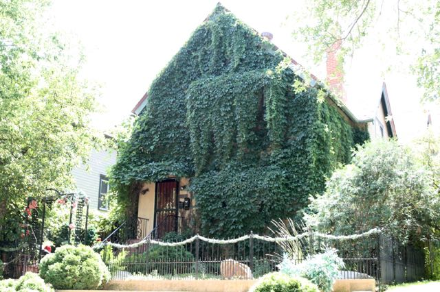 I've seen all seen ivy-covered houses before, but not this covered. Nearly every window on the front and west side of this one is covered.