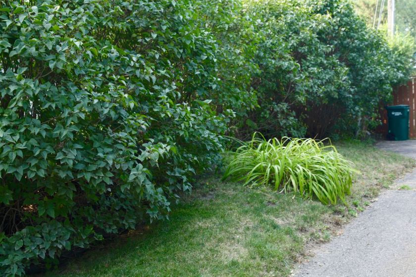 The berm that, for years, has caused Cathy and her husband consternation.