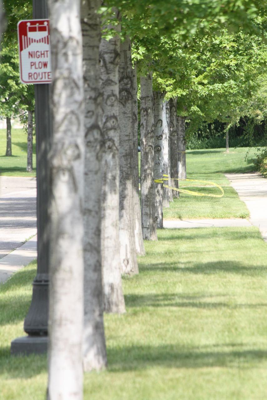 Perfectly aligned trees, green grass, and sidewalks along the boulevard on Atwater Circle.