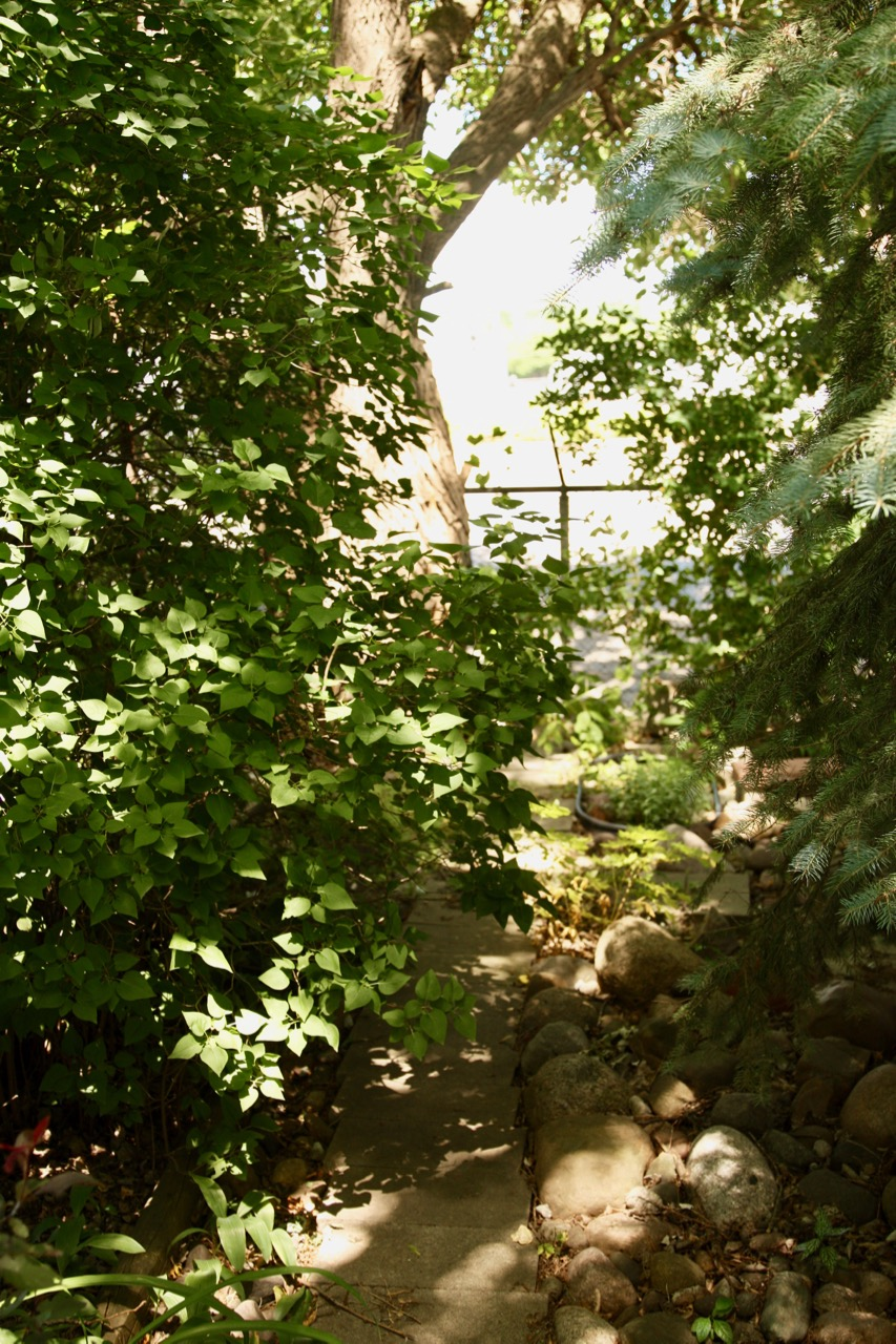 For years Kevin has added plants and flowers to his yard, creating a lush, green hideaway.