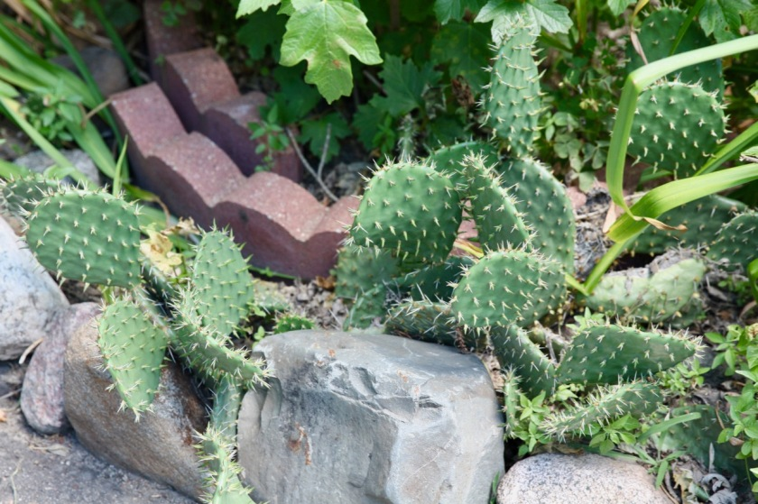 I was surprised to see cacti in the garden.