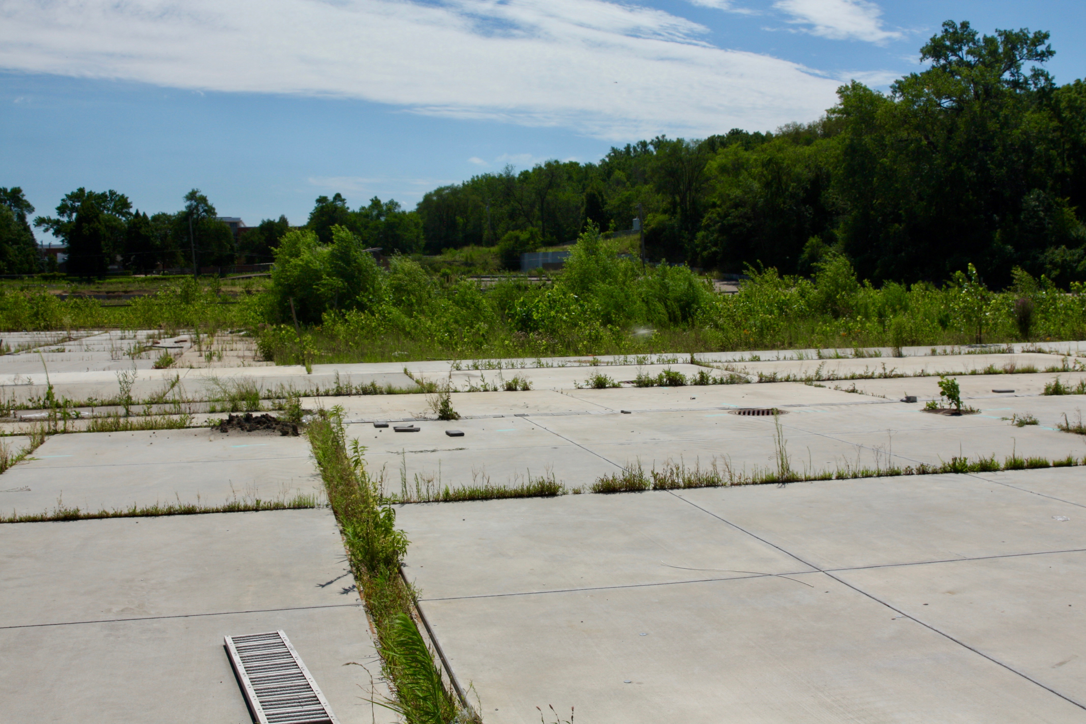 Concrete pads which may have been covered by greenhouses, perhaps appropriately continued to host flora. Beyond the concrete slabs were fields where Linder's grew some of the plants they sold.