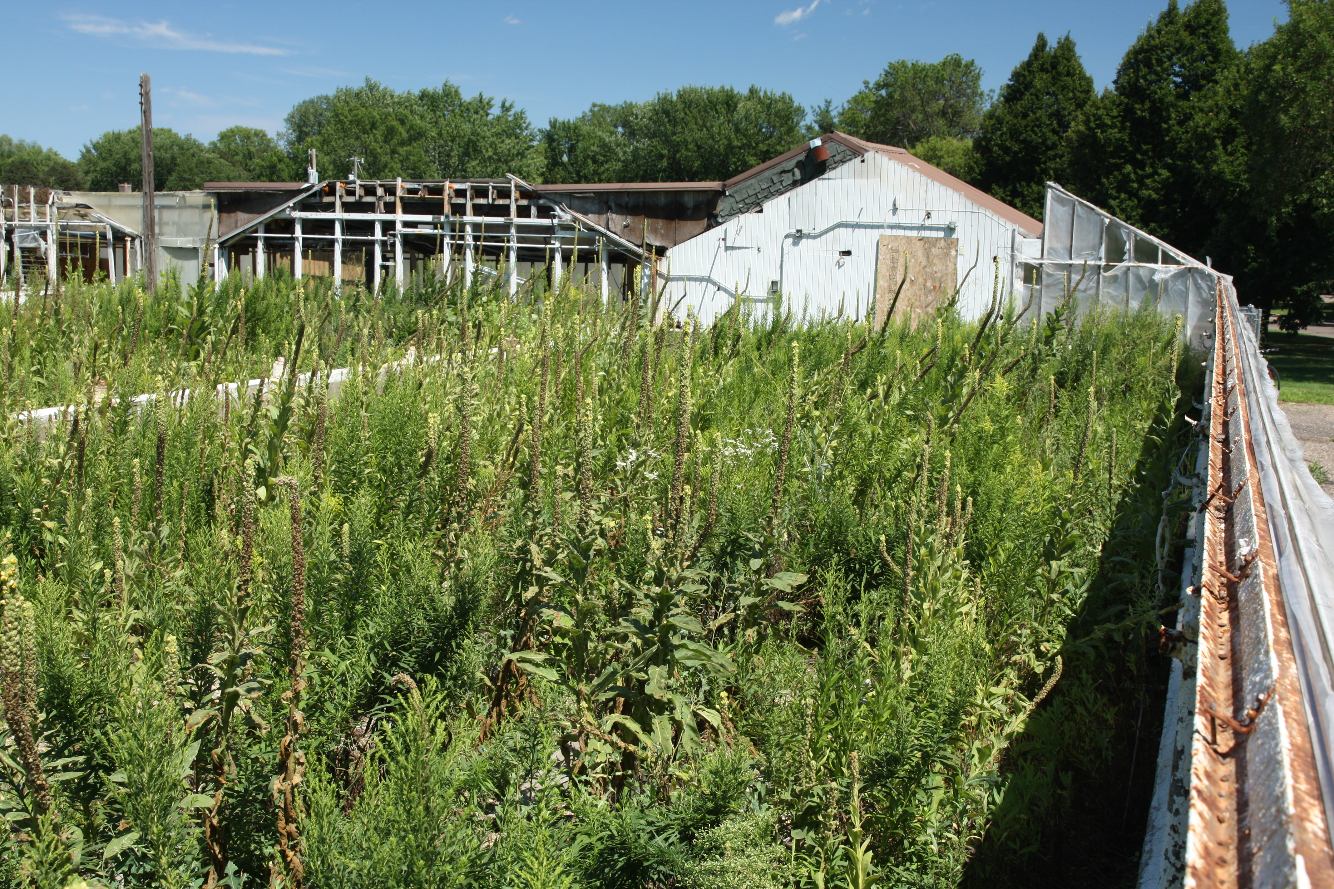 The remains of one greenhouse and support structures. It is remarkable how quickly nature takes over a deserted place.