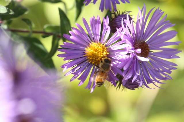 Flowers still bloomed and bees continued to pollinate on a warm October afternoon.