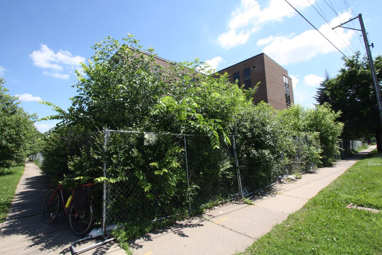 After years of neglect, bushes grow out of control on the west (Snelling Avenue) side of the property. Not a good look for those who go to the State Fair.