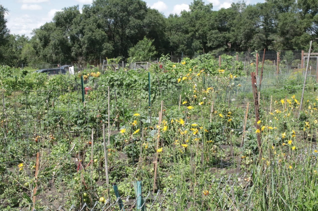 The expansive Highwood Hills (Battle Creek) Community Garden.