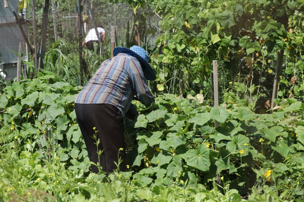 Two people tend to crops in their plots at the Battle Creek Community Garden.